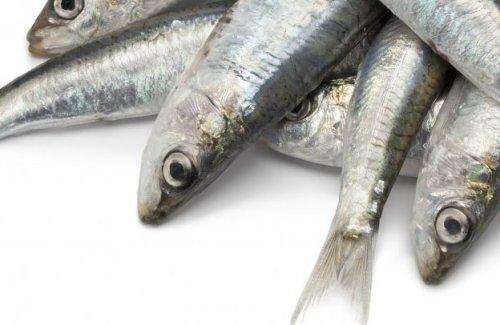 Sardines diabetes
