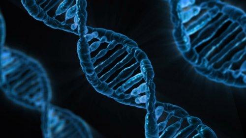 Is Type 1 Diabetes Genetic?
